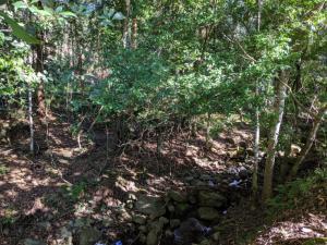 Retreat 2 Main Creek - The back creek